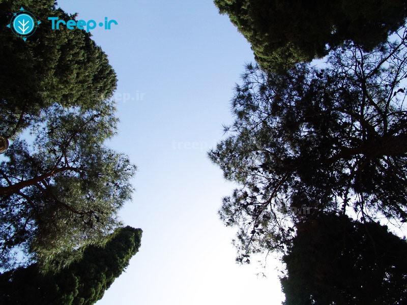 باغ-دلگشا_3