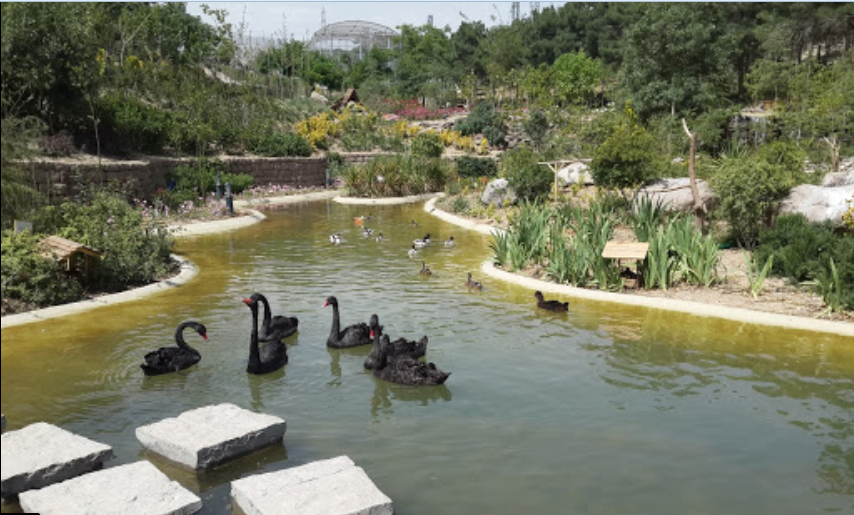 باغ-پرندگان_4