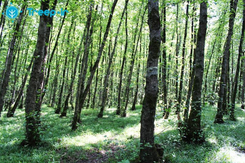 پارک-جنگلی-گیسوم_26