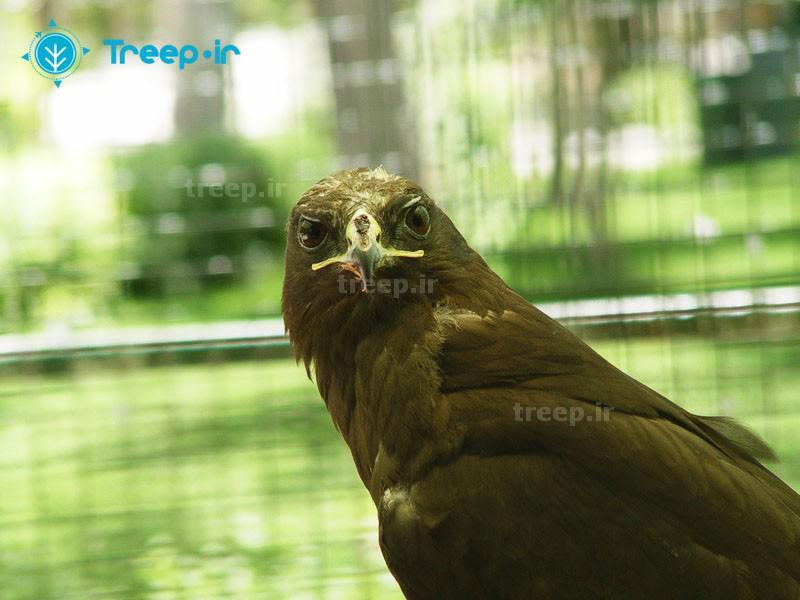 باغ-پرندگان_14