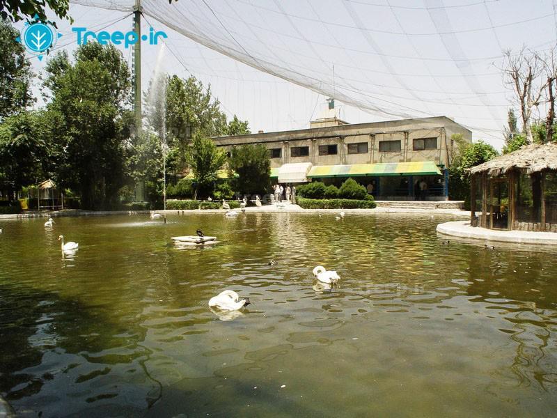 باغ-پرندگان_19