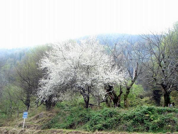تفرجگاه-ساحلی-نمک-آبرود_7