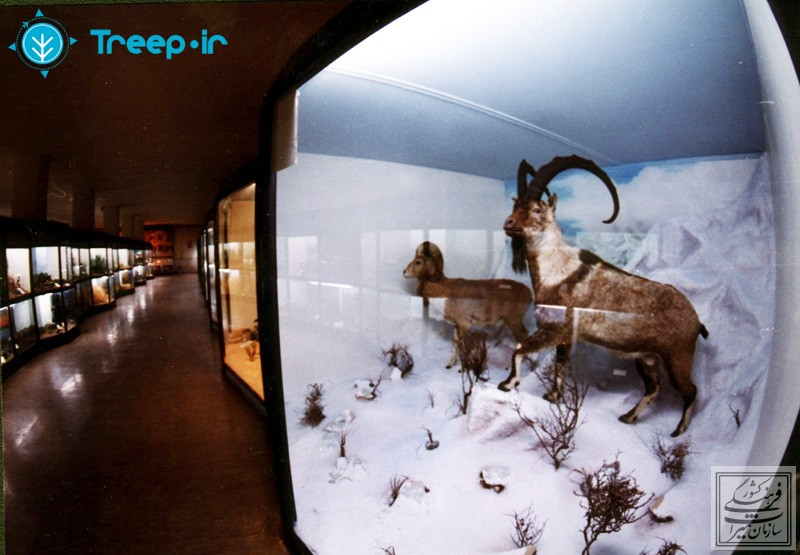 موزه-تاريخ-طبيعي-همدان_12