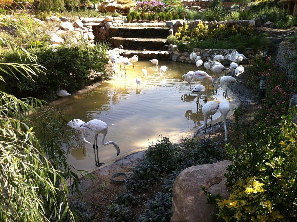 باغ-پرندگان_3