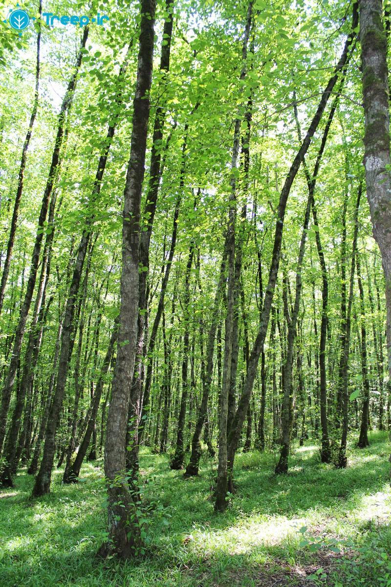 پارک-جنگلی-گیسوم_25
