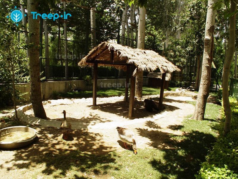 باغ-پرندگان_25