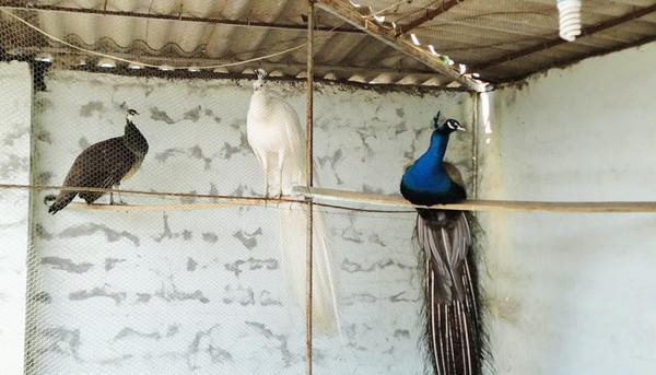 باغ-پرندگان-آستارا_5