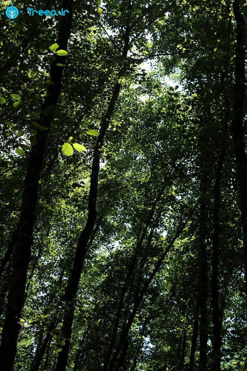 پارک-جنگلی-گیسوم_52
