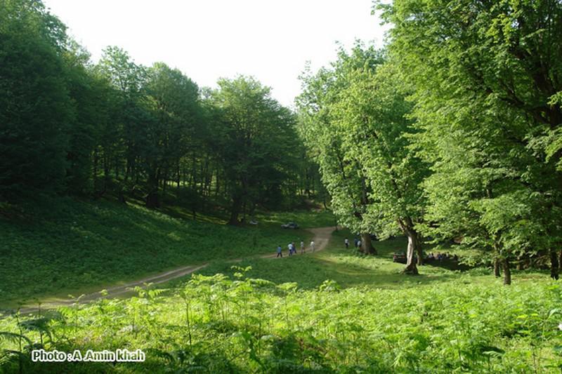 جنگل-دالخانی_10