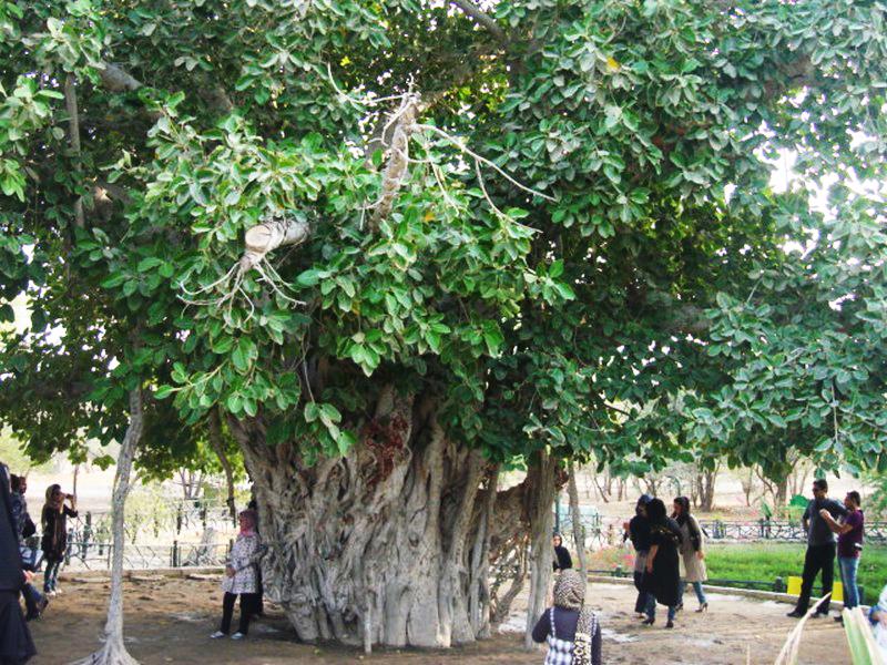 درخت-سبز_1