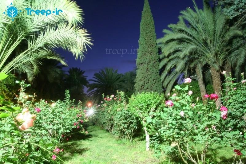 باغ-گلشن_6