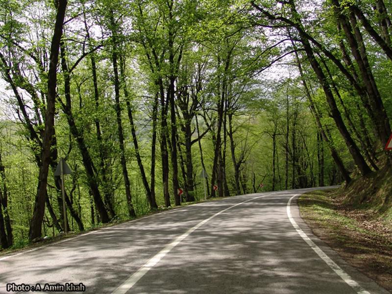 جنگل-دالخانی_9