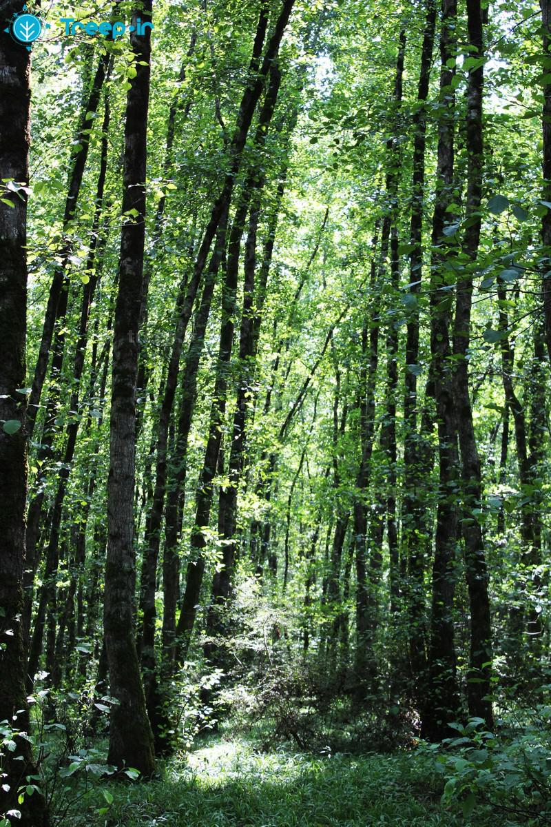 پارک-جنگلی-گیسوم_80