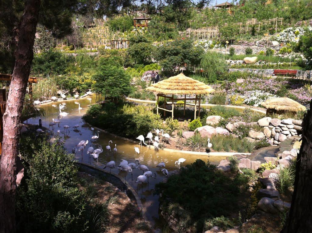 باغ-پرندگان_1
