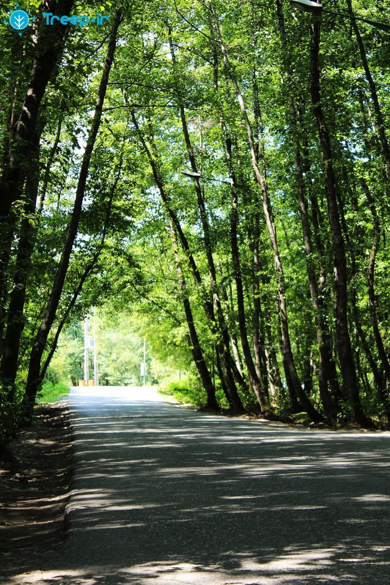 پارک-جنگلی-گیسوم_2