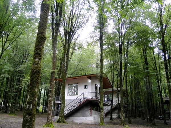 پارک-جنگلی-نهارخوران_3