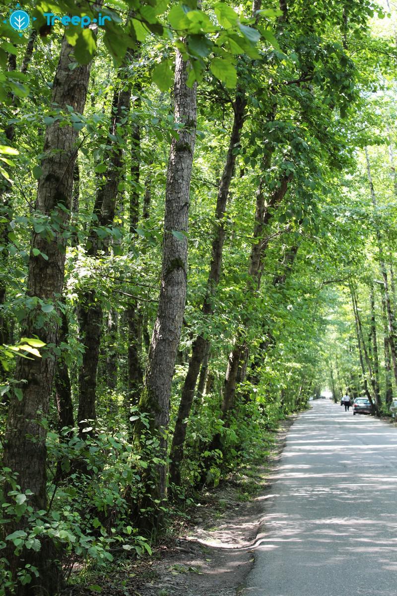 پارک-جنگلی-گیسوم_50
