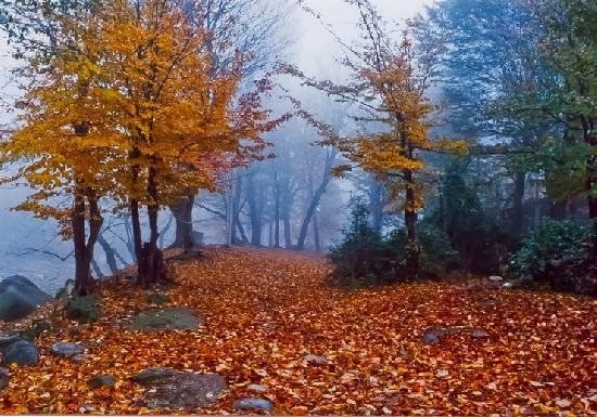 پارک-جنگلی-تنگه-چهل-چای_4