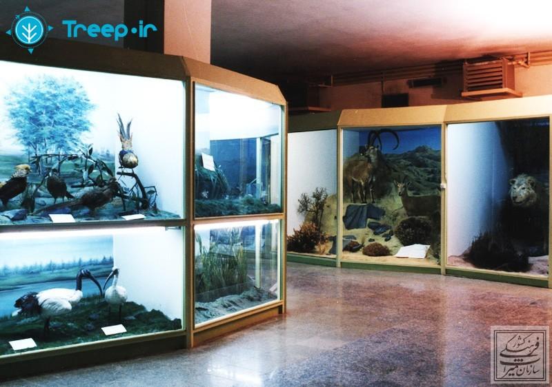 موزه-تاريخ-طبيعي-همدان_18