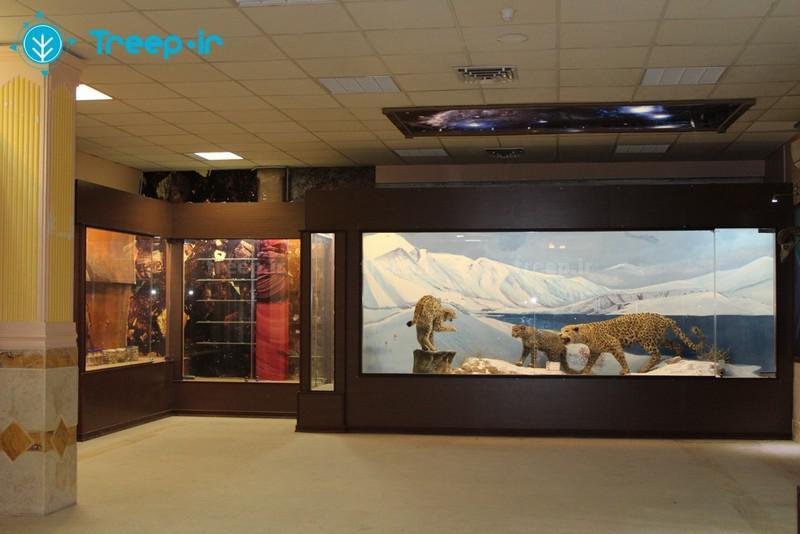 موزه-تاریخ-طبیعی-_7