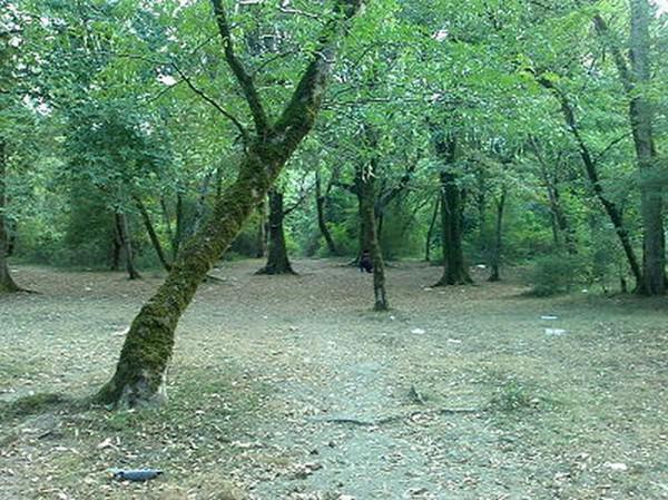 پارک-جنگلی-سیسنگان_5