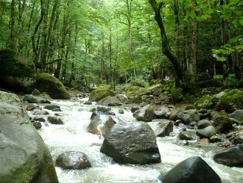 جنگل-دالخانی_1