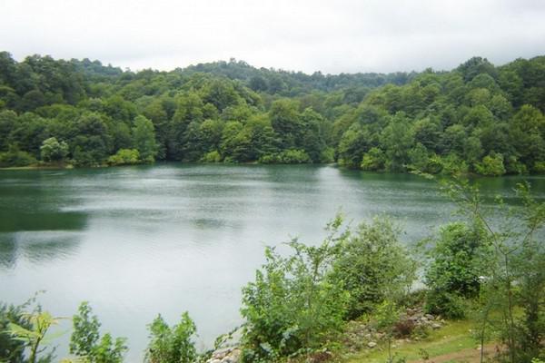دریاچه-و-جنگل-الیمالات_1