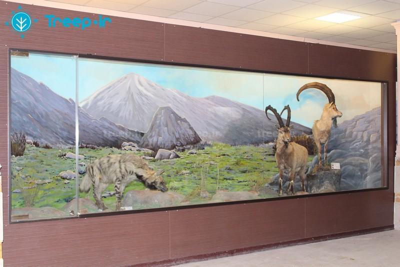 موزه-تاریخ-طبیعی-_8