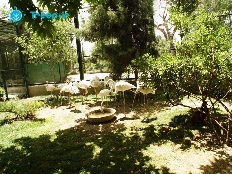 باغ-پرندگان_24