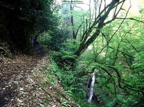 پارک-جنگلی-سیسنگان_9