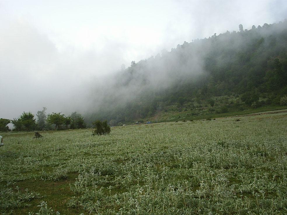 منطقه-گردشگری-جنگل-اولنگ_1