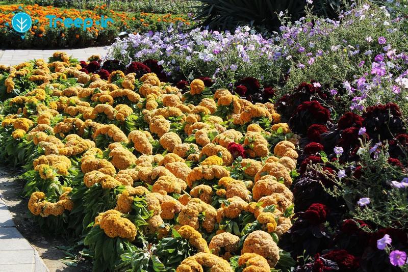 باغ-گل-ها_2