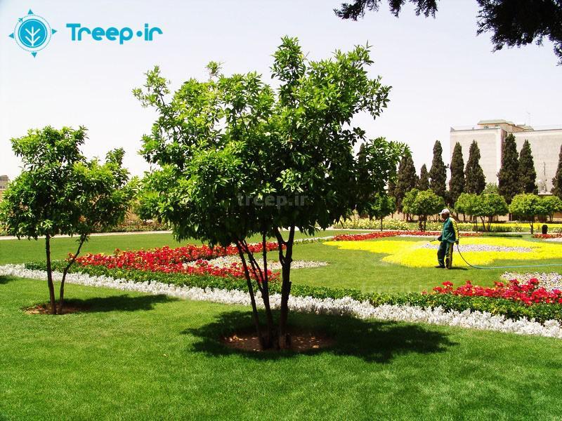 باغ-جهاننما_3