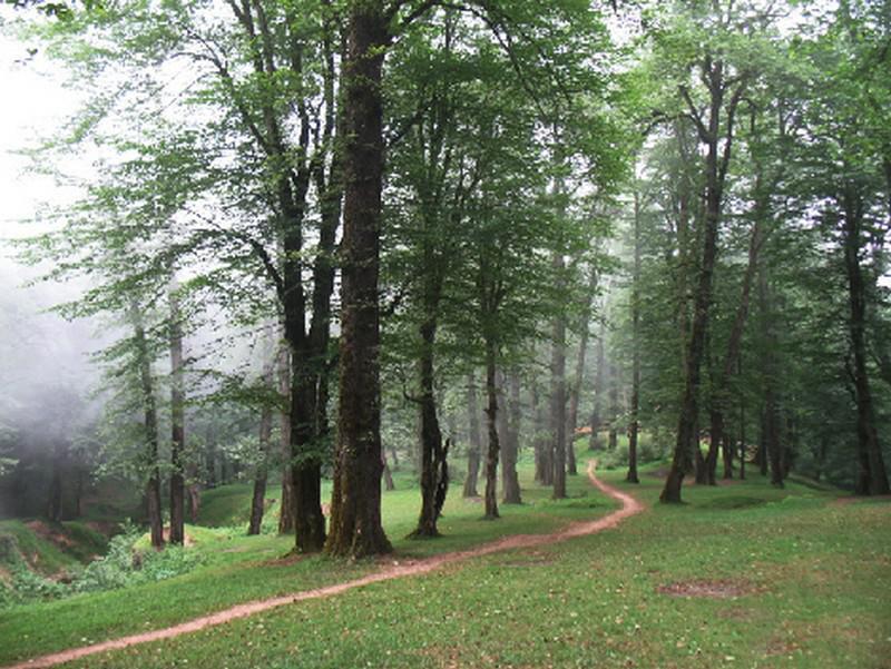 جنگل-دالخانی_5