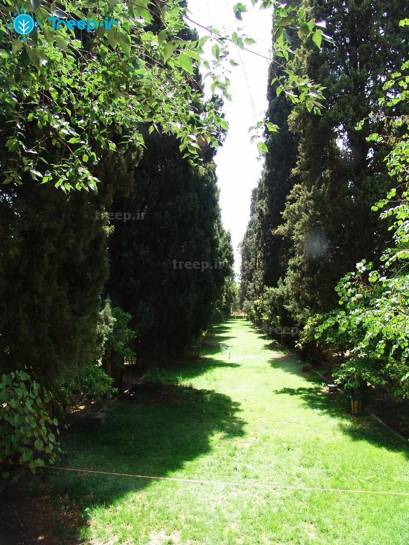 باغ-ارم_20