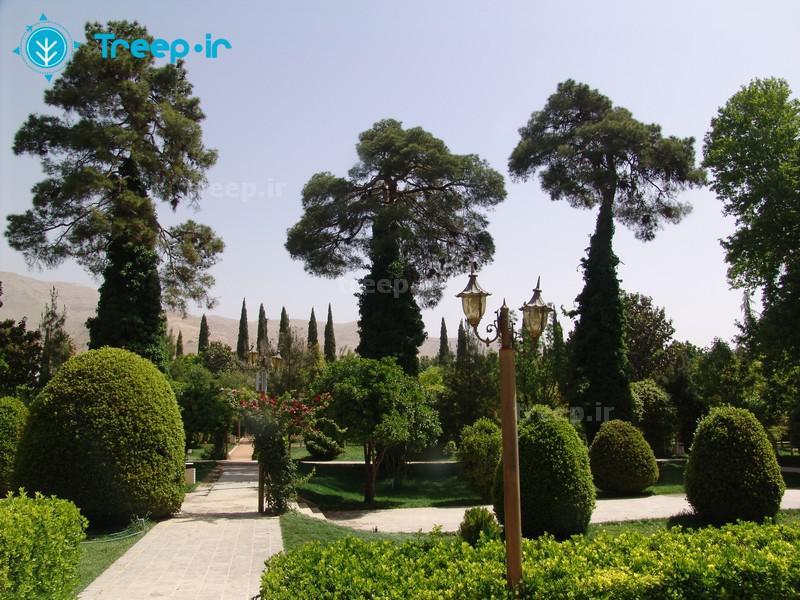 باغ-ارم_7