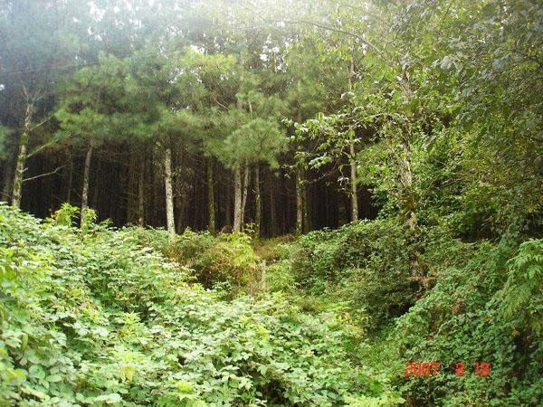 پارک-جنگلی-بی-بی-یانلو_1