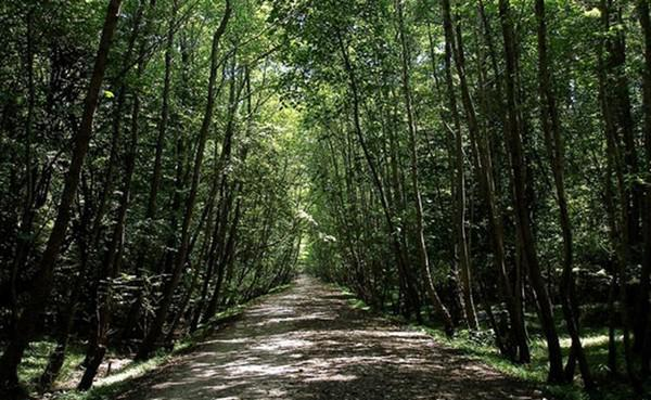 پارک-جنگلی-سیسنگان_11