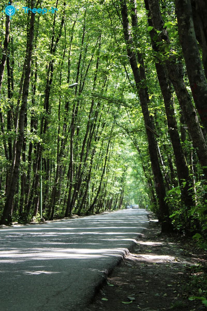 پارک-جنگلی-گیسوم_45