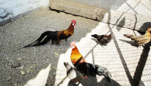 باغ-پرندگان-آستارا_6