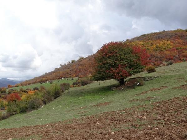 منطقه-هزار-جریب-و-روستای-ارم_3