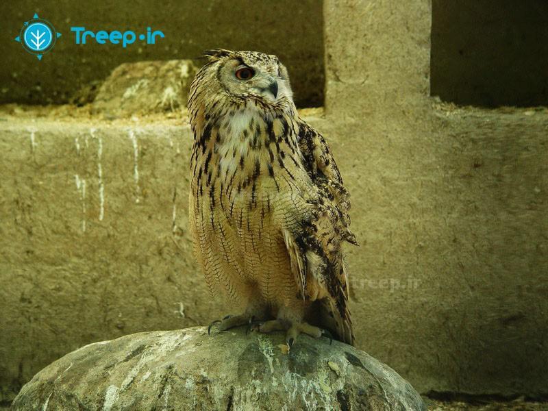 باغ-پرندگان_6