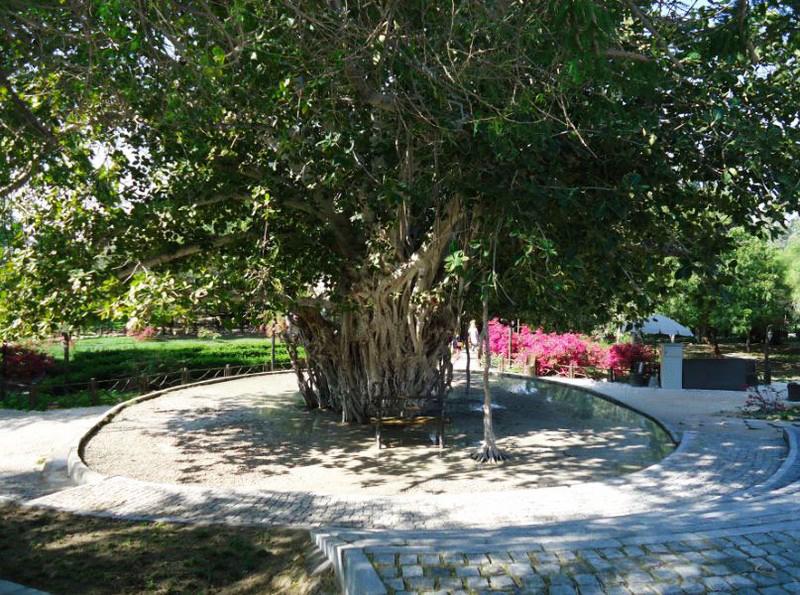 درخت-سبز_2
