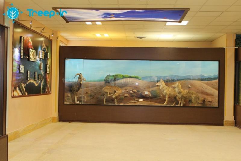 موزه-تاریخ-طبیعی-_5