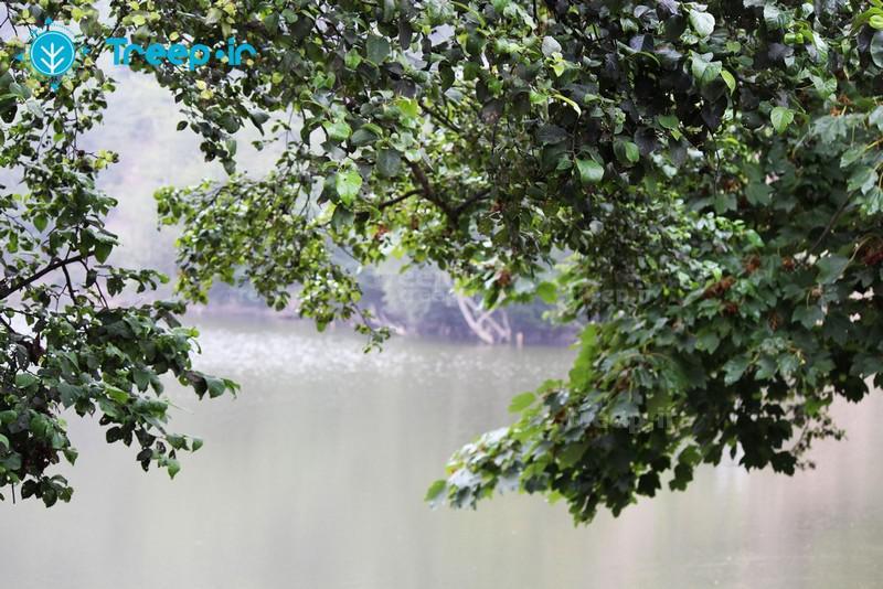 دریاچه-شورمست_14