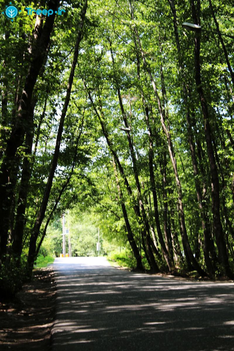 پارک-جنگلی-گیسوم_8