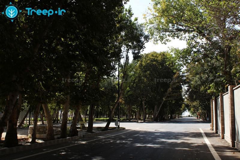 پارک-چمران_6