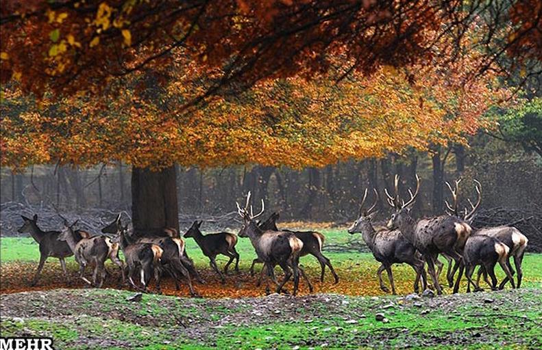 پارک-ملی-گلستان_5