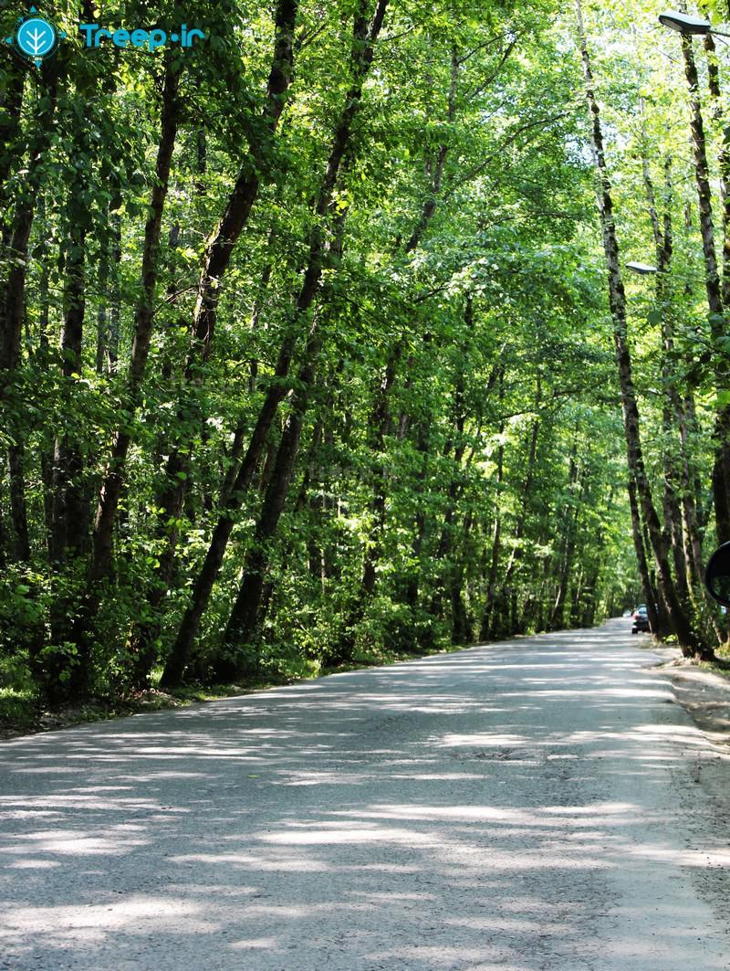 پارک-جنگلی-گیسوم_78