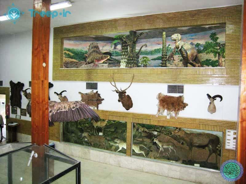 موزه-تاريخ-طبيعي-زنجان_5